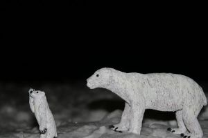 better shot of polar bears by assemblit