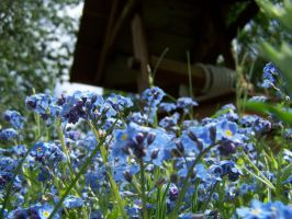 Forgetmenots From A Worms View by ByronGiant