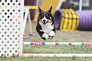Santa Barbara Agility Club 1 by Deliquesce-Flux