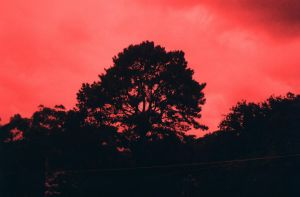 Blood Red Sky by nokel