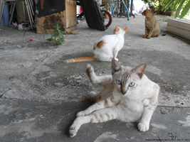 Country cats 20141025 _ 1 by K4nK4n