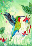 Hummingbird by dragonflywatercolors