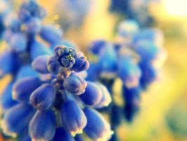 blue flowers by bloody-magpies