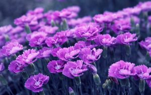 Personal Wonderland by Eissacholland