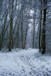Snow stock 39 by Malleni-Stock
