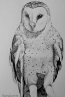 Barn Owl by Alone-In-The-Abyss