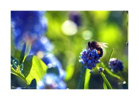 Into the blue and green by Hieronimus-art