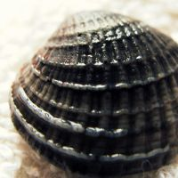 Shell III by LostThyme