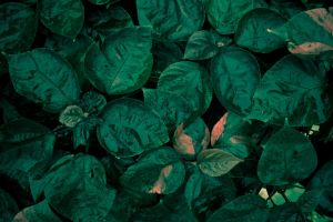 forest ivy leaf by CO2PHOTO-stock