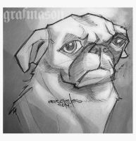Angry-pug1 by grafmason