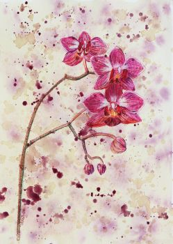 Orchids by heartMelinda