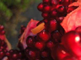 pomegranate 15 by voider00