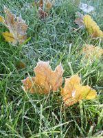 Yellow and Brown Frost Leaf Sun Ray by TabiKittie