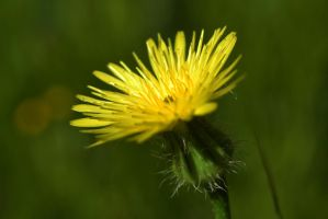 flower by Sadeq-Photography