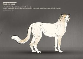 Shedu cat female 183 by Templado