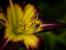 Flies On The Butter by InayatShah