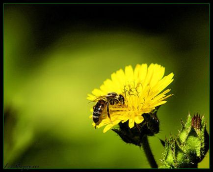bee. by Le-Voyageur