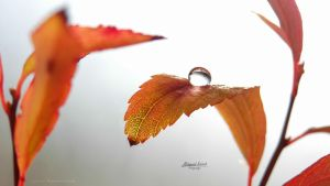 Leaf with drop water by MohannadQassab