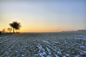 Frosty morning by tomsumartin