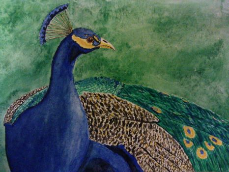 Peacock by tomtsam