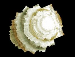 fractal seashell by fengda2870
