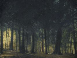 Forest X by Amalus