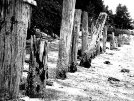 Logs by musicismylife2010