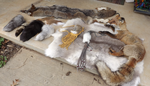 Furs Collection by RabiesRai