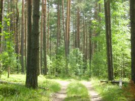 Forest path by Tigrantia