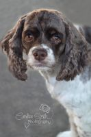 Daisy by CandiceSmithPhoto