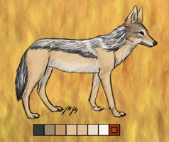 Black-backed Jackal by pinemartenartin