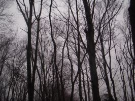 Nature In the Rain.8 by xxzimmer483xx