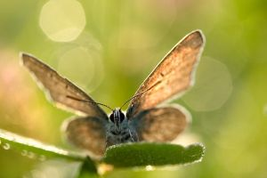 Butterfly from the summer by padika11