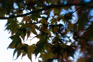 Shielding Leaves by Death-By-Romance