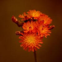 Orange by plbeaulieu