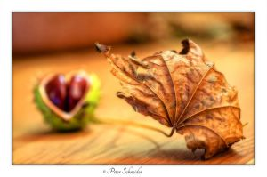 Fall by Phototubby