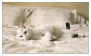 Kitty by cat-lovers