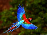 Vibrant Parrot by Chiller252
