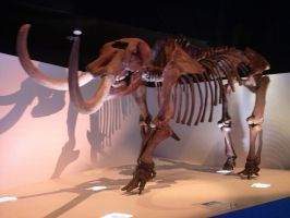 My time at the Houston museum part 6 by Joel-Cevallos