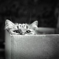 Cat Trap by StacyD
