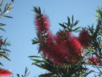 Bottle Brush Tree (1) by TinyTums