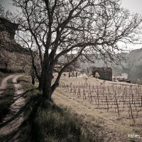 THe house after the vineyard by rdalpes