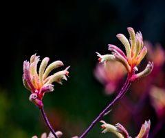 kangaroopaw love by SaphoPhotographics