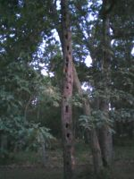 woodpecker tree by wittlecabbage