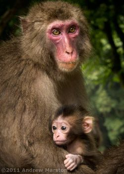 Monkey Mtn: Mother and Child by AndrewMarston