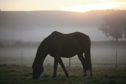 Sunrise Grazing by escaped-emotions