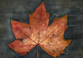 Autumn leaf by Medhi