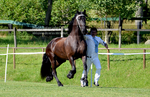 Friesian 20 by JullelinPhotography