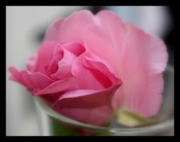 rose by crissial