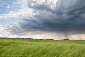 Grass and Storm Clouds by inessentialstuff